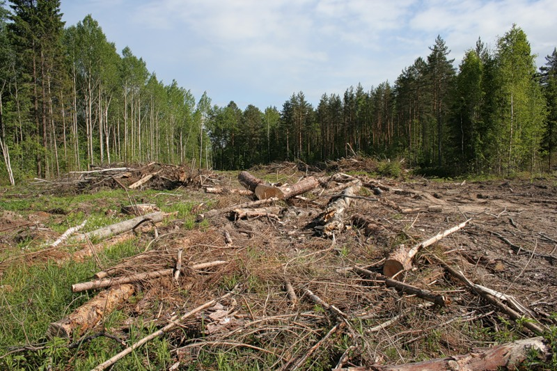 forestry problems