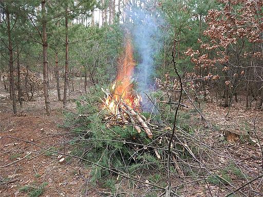 Лист БАУ до FSC в Україні щодо лісосічних відходів