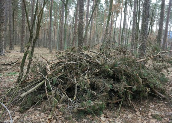 Opportunities for harvesting wood fuel in the forests of Ukraine – UABIO Position Paper 19