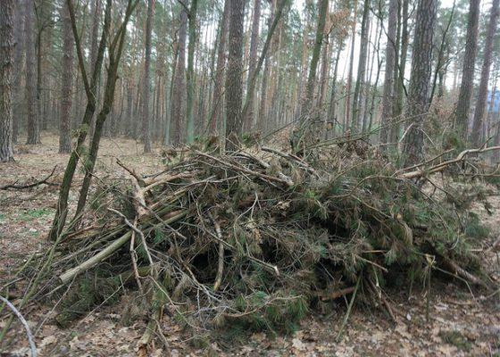 Можливості заготівлі деревного палива в лісах України – Аналітична записка UABIO 19