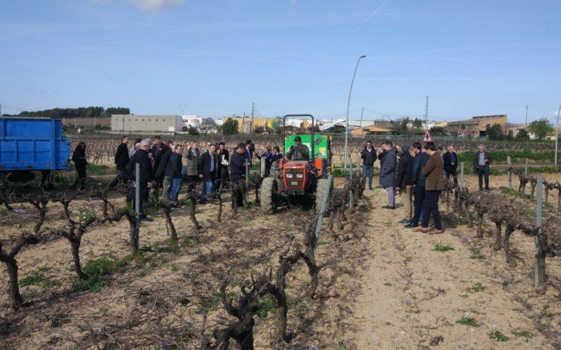 Використання виноградних обрізок для виробництва теплової енергії. Проєкт AgroBioHeat
