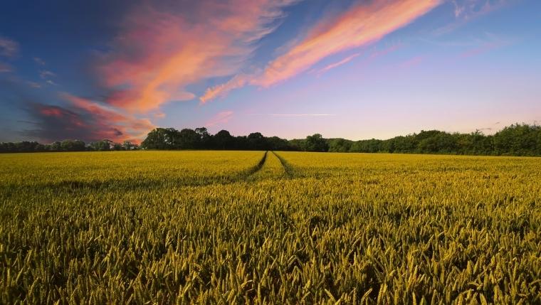 Bioenergy is the main renewable energy in Europe