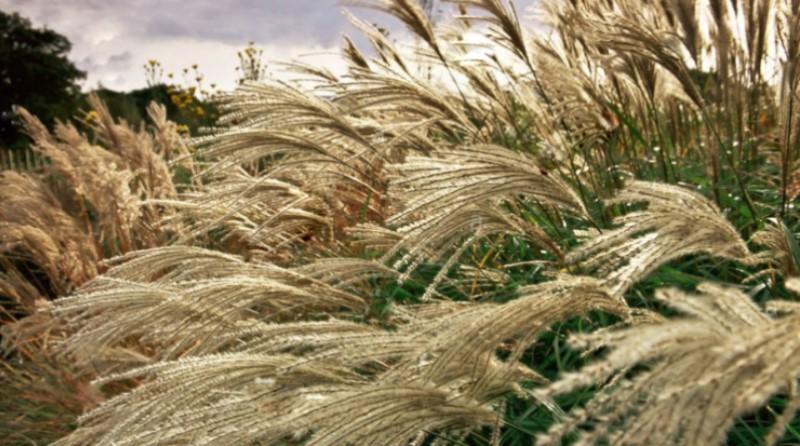 Близько 4 млн га земель придатні для вирощування енергетичних рослин в Україні