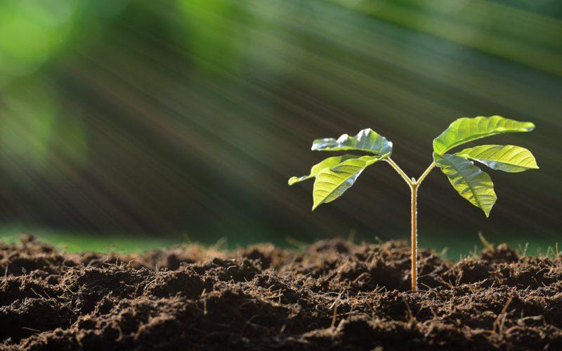 Як сталі біогазові технології сприяють оздоровленню ґрунтів та екосистем? — 3 аргументи до Всесвітнього дня ґрунтів