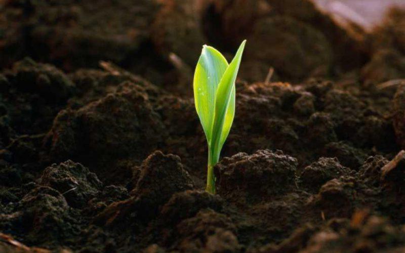 Онлайн-конференція «Національний виклик: деградація ґрунтів, чи відновлення їх родючості»