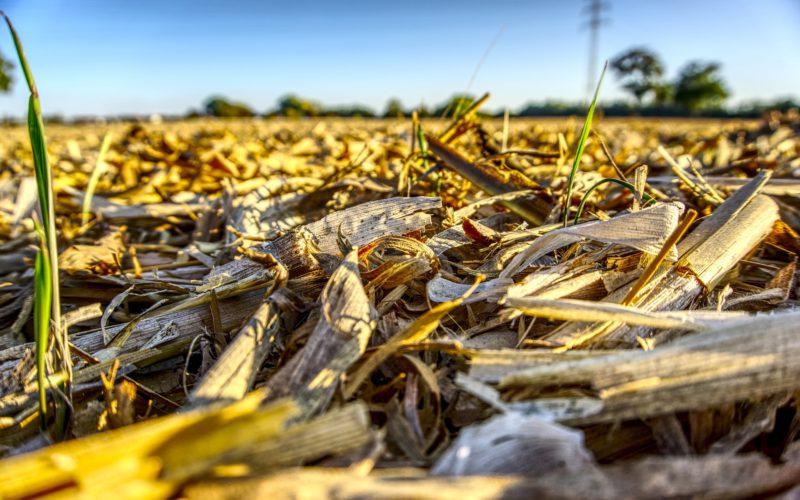 Перспективи використання відходів сільського господарства для виробництва енергії в Україні