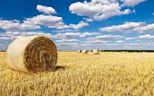 Данія  — світовий лідер із використання агробіомаси в енергетиці!