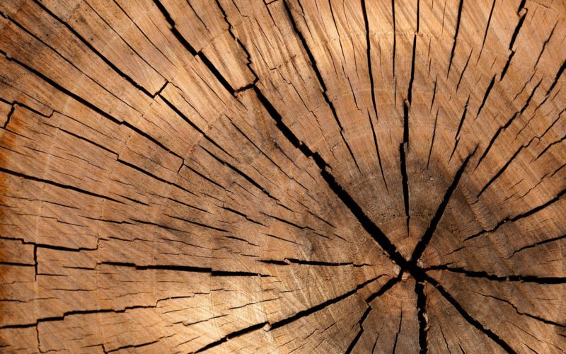 Cascading principle of biomass use – the RED II Directive revision in EU