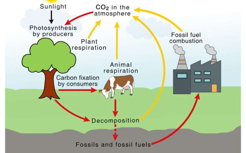 A short carbon cycle or the benefits of biogas and biomethane that you may not have known about